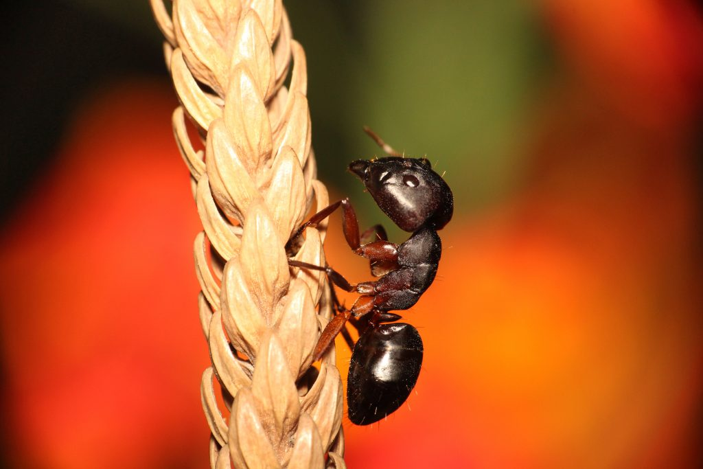 probleme de fourmis
