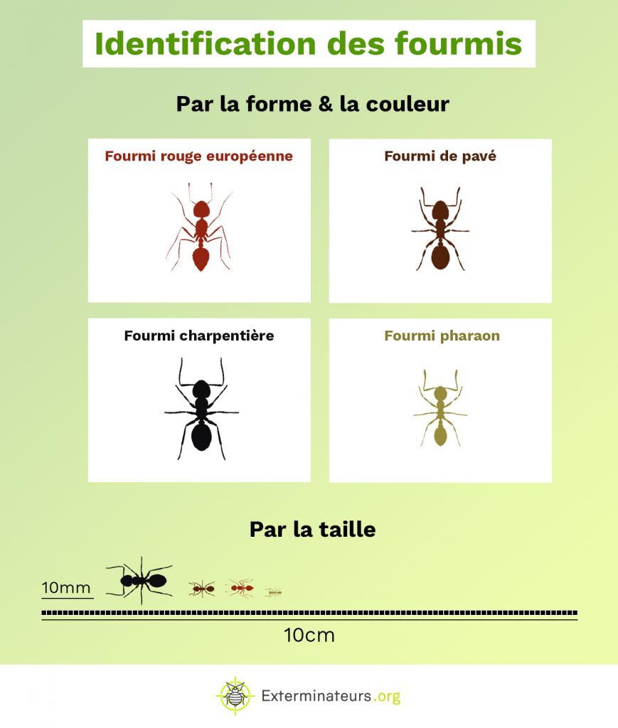Tableau d'idenfitication des fourmis